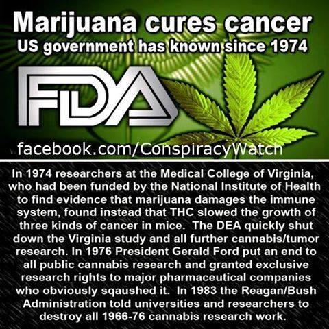 FDA marijuhana