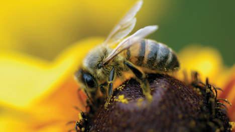 Niet alleen de bijen, maar ook dit soort plaatjes met uitsterven bedreigt..?