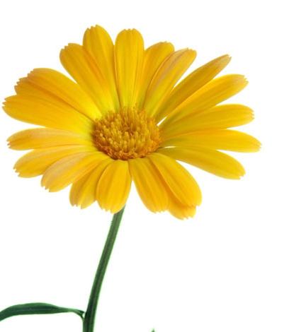 bloem_homeopathie