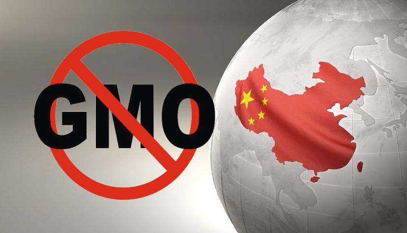 china no gmo