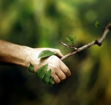 give a tree branch a hand