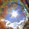 healing-trees-light
