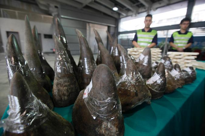 In beslag genomen neushoorns op de luchthaven van HongKong