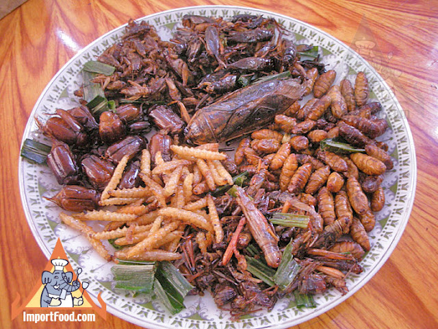 insect_plate_l.jpg
