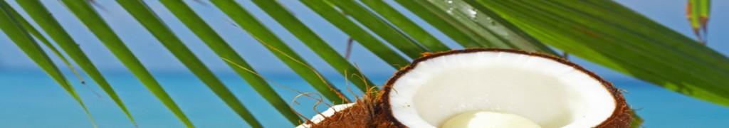 kokospalm en noot2