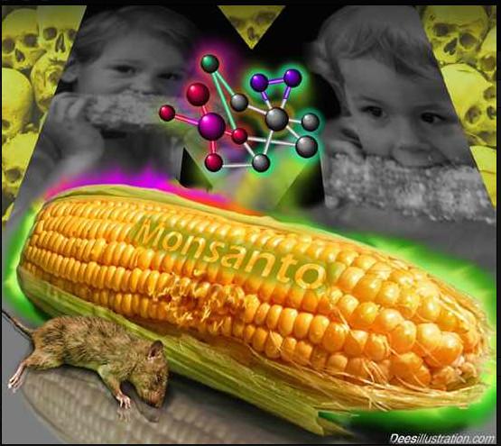 Het lijkt er steeds meer op dat de werkelijkheid deze karikaturale plaatjes inhaalt..! Wetenschappers luiden steeds vaker de noodklok omtrent gezondheidsrisico's die het gebruik van GMO-zaden met zich meebrengt.