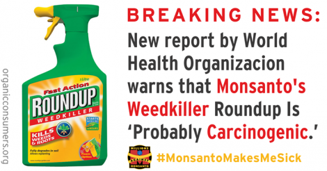 Het tovermiddeltje van Monsanto.. Dat met veel lobby-werk in de EU werd goedgekeurd.. Inmiddels verboden in uw tuin, maar niet op het voedsel..!! Glyphosaat. Inmiddels door de WHO als 'zéér waarschijnlijk kankerverwekkend' gekarakteriseerd..!