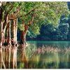 nature lake trees
