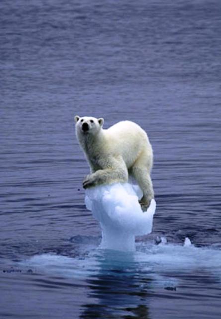 Het symbool voor global warming: de IJsbeer.