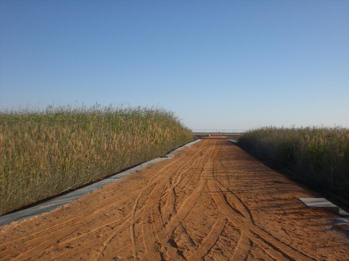 Foto van de 'Reed bed water treatment plant' in Oman. Natuurlijke zuiveringsinstallatie -de grootste ter wereld- voor 'oliewater'.