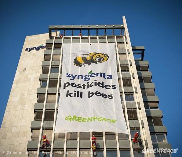 syngenta-greenpeace